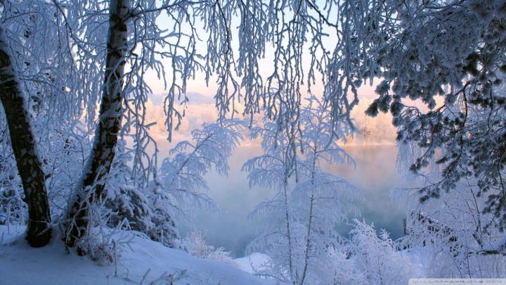 beautiful_winter_frost-wallpaper-2048x1152